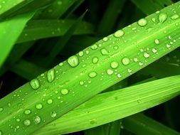 Water Drops on bright green leaf