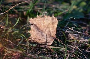 lonely dry Leaf Autumn closeup