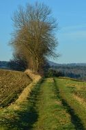 lane between fields