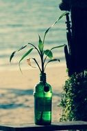 Plant in the bottle