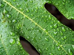 small raindrops on a green leaf