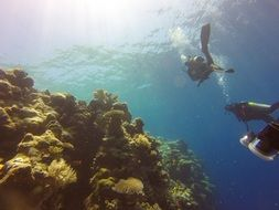 scuba divers near the reef
