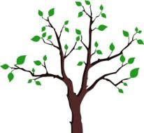 tree with Green leaves on Branches, drawing