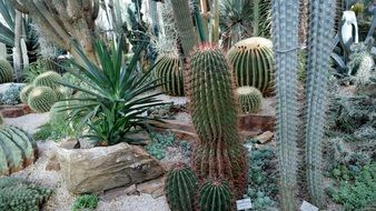 collection of cacti