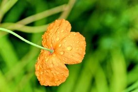Water drops on orange flowers nature plant spring