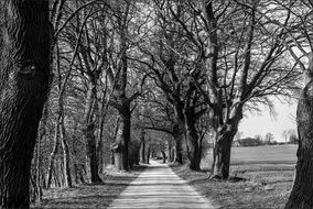 black and white photo of avenue in Mecklenburg