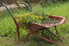 flowers planted in a wheelbarrow in the garden