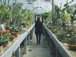 woman in a cactus greenhouse in a botanical garden
