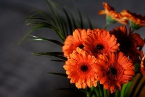 Orange flowers gerbera blossom
