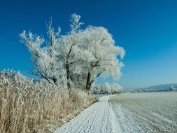 snowy trees amidst a sunny winter landscape