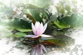 romantic water lily