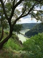 Rhine River streaming in scenic valley at summer