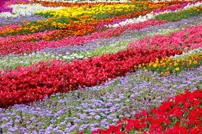 colorful bright Flower Beds