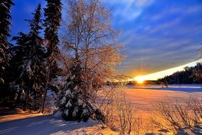 winter morning landscape in Canada