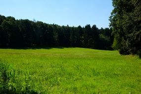 sunny green meadow in the forest