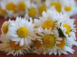 bouquets of white daisies