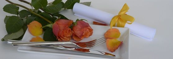 rose flower on the plate