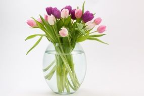 multicolored tulips in a transparent vase