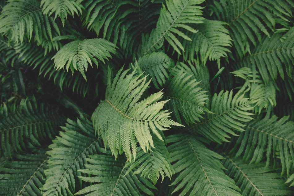 Green Fern leaves, top view