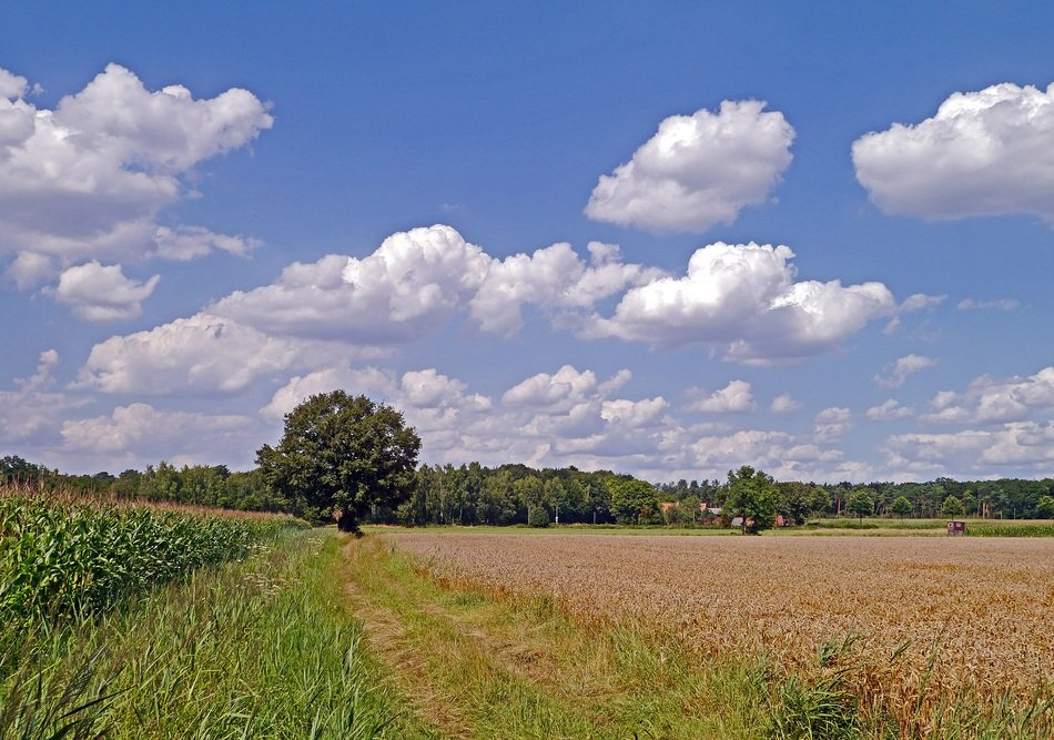 agricultural fields on a summer day