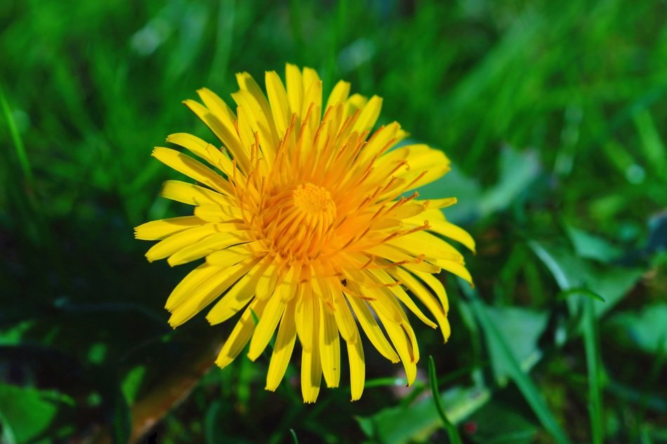 yellow flower on green grass close up