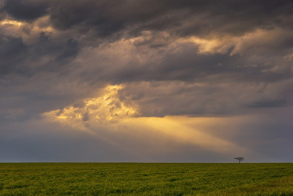 storm clouds with sunbeams over a green field
