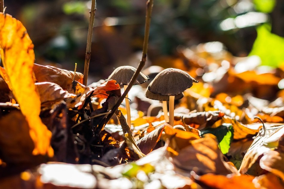 Brown mushrooms and foliage in the forest in autumn