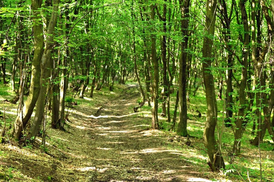Narrow path in a green forest