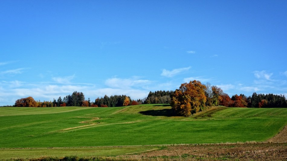 Autumn colored Trees above green field under blue sky, germany, bavaria