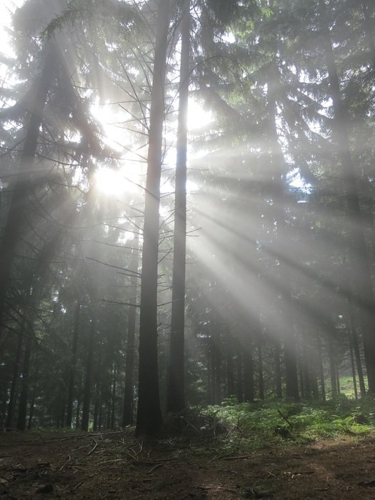 sun rays through thickets of trees
