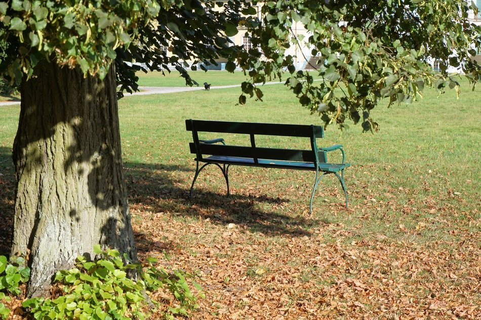 Green bench in autumnal park