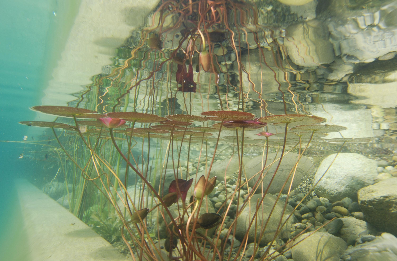 underwater painting plants - HD1200×790