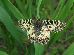 Colorful butterfly on green grass