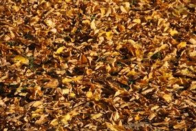 dry yellow fallen Leaves, background
