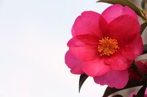 incredibly delicious Rosa Spring Flower