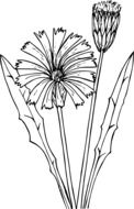 black and white drawing of a flower
