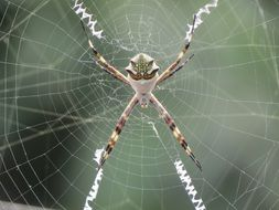 Macro photo of exotic spider in nature
