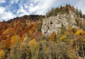 mountains in the autumn forest in romania