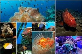 Deep Water Fish Collage Photo