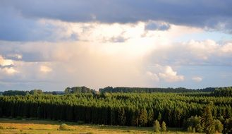 panoramic view of cloudy sky over a green forest