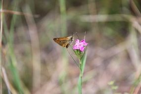 wild butterfly on the forest flower