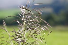 blades of meadow grass