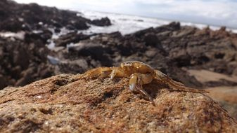 crab on a rocky seashore