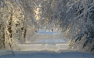 Snowy Forest Road Winter nature