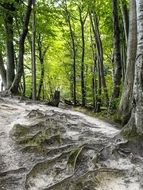 forest root trees nature landscape