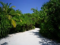 Sand road in a green palm forest