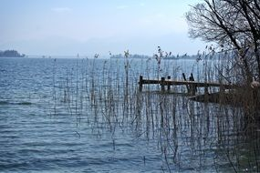 wooden pier in the reeds on Chiemsee lake