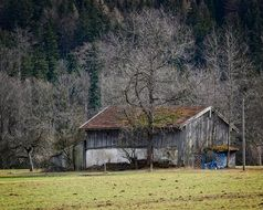 field shed in a meadow among trees