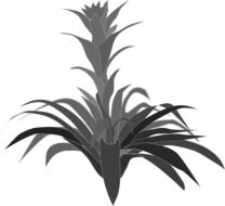 black and white drawing of an exotic plant