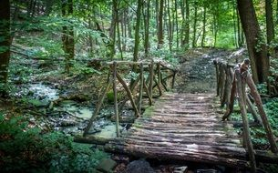 wooden bridge over a forest stream in Slovakia